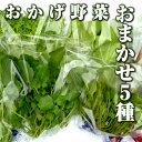 伊勢志摩の自然で育った珍しい水耕栽培野菜!おまかせ5種野菜 200g ファーム海女乃島