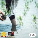 特別栽培米 元年産 熊本県産 森のくまさん 白米10kg(5kg×2袋) 【農薬5割減・化学肥料5割減】【送料無料】/お米/米/熊本県産【米 10kg 送料無料】【お米 10kg 送料無料】送料無料 (米 10kg)