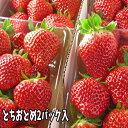 とちおとめ いちご (2パック入2L〜3L) 栽培方法にこだわった甘いイチゴ 【発送時期:2月中旬頃〜5月上旬頃まで発送予定】