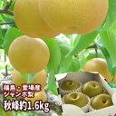 【あす楽対応】ジャンボな秋峰梨 福島県かやばの梨(約1.6kg箱 3〜4玉入)