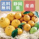 静岡浜北 柑橘類のアソートセット(温州みかん、デコポン、レモン、せとか) 3種類 合計約4kg【出荷開始!】【2月中旬までの販売予定】
