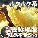 3箱まで送料同一!新さつまいも3kg豚が育てた紅東レビュー3400件サツマイモ紅あずまさつま芋薩摩芋