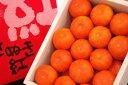 小原紅早生ハウスみかん(さぬき紅みかん) 約2・5kg S〜L 【香川産】果皮がオレンジ色系!人気のミカンが夏に復活です。7月配送