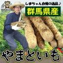 島田ファーム産 やまといも 2kg詰め ギフトBOX