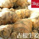 土付き(泥付き)古根生姜 3kg 国産 無農薬・無化学肥料