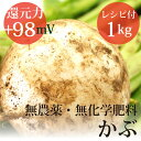 かぶ 1kg ヴィーガンレシピ付き無農薬・無化学肥料・千葉県産還元力(抗酸化力)ORP+98mV