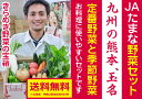 【送料無料】九州の熊本のJAたまなの野菜セット12(きらめき野菜の玉手箱)