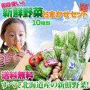 北海道産 野菜 【 農家厳選 旬の野菜セット 詰め合わせ10種】 送料無料 ママ割 ポイント5倍