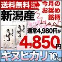 キヌヒカリ 10kg(5kg×2) 30年産 新潟産 米【送料無料】(北海道、九州、沖縄除く)【今月のお奨め銘柄】