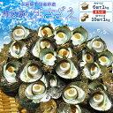 三重県伊勢志摩産海女漁の天然活さざえ1kg 送料無料 サザエのサイズと個数が選べます お中元 ギフト