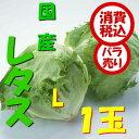 【税込 バラ売り】茨城・長野県産他 レタス L 1玉(れたす サラダ)上越フルーツ