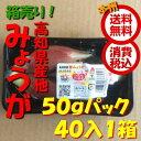 【送料無料 箱売 消費税込】高知県産他 みょうが 約50g 40パック1箱(業務用 みょうが ミョウガ 茗荷 )上越フルーツ