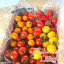 ミニトマト1.5kg ピッコロトマトミックス 愛知県産 ミニトマト クール便 送料無料 ピッコロトマトが3種入り、生産者より産地直送 美味しいトマト ミックストマト プチトマト トマトリコピン カロテン