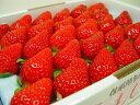 徳島県佐那河内村産 さくらももいちご 28粒入り 市場へ出荷されて間もない苺の新品種!甘さ抜群でとっても食味が良いイチゴの逸品! 発送:3月上旬〜3月下旬の間