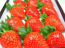 奈良県産いちご 古都華(ことか) 大粒12入り 2010年に市場に投入された奈良県期待のいちごの新品種!高糖度で甘さ抜群!しっかりとした果肉は食味の良さが抜群! 出荷予:2019年1月上旬〜