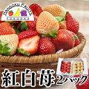 【予約販売・送料無料】福岡産 紅白いちご (あまおう&白いちご)2パック