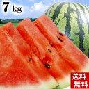 (送料無料)富良野・浦臼産マドンナスイカ 秀品 2Lサイズ 7〜8kg でんすけすいかよりも糖度が高い糖度12度の西瓜。シャリ感も良く値段も安い。旬のフルーツグルメ(くだものギフト お中元)