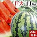 (送料無料)富良野・浦臼産マドンナスイカ 秀品 6Lサイズ 11kg以上 でんすけすいかよりも糖度が高い糖度12度の西瓜。シャリ感も良く値段も安い。旬のフルーツグルメ食品 フルーツ・果物 スイカ 大玉スイカ(くだものギフト お中元)