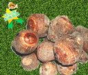 【岡山県産】さといも (里芋) 約400g〜500g