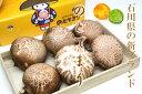石川県産 原木生椎茸 のと115 最高級ブランド 「のとてまり」 1箱 6〜8枚入 平成23年末にデビュー 雪のため1月いっぱい出荷停止します