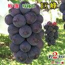 送料無料 特選 種無し 完熟 ぶどう 巨峰 長野県産 約2キロ