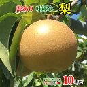 訳あり 豊水 梨 減農薬 長野県産 約10キロ