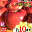 送料無料 長野産 訳あり 葉とらず 味極み りんご 減農薬 産地直送 約10キロ