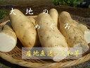 ★千葉特産 大和芋 1箱4キロ★自然薯のような粘り