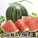 秋スイカ M-1玉入【送料無料】熊本産 西瓜