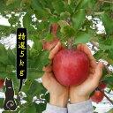 【青森 りんご】【特選 サンふじ りんご 5kg】      【送料無料】りんご農家自身が直接販売だから安い!!おいしい!!