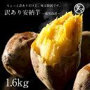 鹿児島産安納芋1.6kg訳あり特価でご予約開始!安納芋は美味しいだけじゃなく栄養も食物繊維もたっぷり♪【サツマイモ 訳あり】|南九州産 お取り寄せ さつまいも あんのういも 安納いも