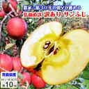 りんご 訳あり 10kg 送料無料 青森県産 サンふじ 葉とらずりんご リンゴ 林檎