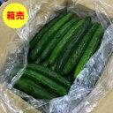 【九州産】【送料無料】箱売り きゅうり(キュウリ) 1箱(5kg)