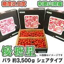 【送料無料】【ミニトマト】優糖星(ゆうとうせい) バラ 約3,500gシェアタイプ!