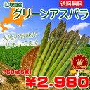 【送料無料】北海道産グリーンアスパラ L〜2Lサイズ750g(150×5束)