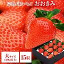 送料無料 大サイズ 15粒 380g以上(1粒あたり23〜29g) いちご イチゴ 苺 大粒 高級 大きくて甘い おおきみ タルト ショートケーキ の材料にも フルーツ 果物 あまおう とちおとめ あきひめ スカイベリー よりも 大きい ギフト