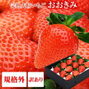 規格外 訳あり わけあり 送料無料 380g以上(1粒あたり18〜23g) いちご イチゴ 苺 高級 甘い おおきみ タルト ショートケーキ の材料にも フルーツ 果物 (順次発送予定)