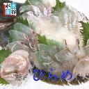 三重県産 活〆 ヒラメ(養殖)ひらめ 活〆 お造り 昆布締め 5枚卸しいたします