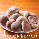 【送料無料】原木生しいたけ さまざまな味わい方が出来る|椎茸 シイタケ 野菜 きのこ キノコ 茸【WS】