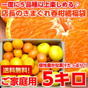 個性豊かな果汁たっぷり♪5種類以上の柑橘が楽しめる店長のきまぐれ春の柑橘福袋 たっぷり5kg【北海道・沖縄・一部離島は別途800円】