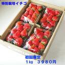 特別栽培 いちご 身内へのギフト・贈答、うち使い用 1箱1kg(250g×4パック) ゆめのか 愛知県産 フルーツ 【送料無料】