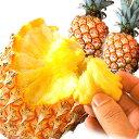 【送料無料】沖縄県産 スナックパイン 2kg[2〜4個入]産地直送 |ちぎって食べる ボゴールパイン パインアップル パイン 沖縄 沖縄産[食べ物>フルーツ>パイナップル]
