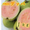 グァバ 約1kg 【発送7月下旬〜9月】 沖縄産 赤・白どちらになるかはお任せになります。 【沖縄産 グアバ トロピカルフルーツ 果物 お取り寄せ / βカロテン ビタミンC リコピン ポリフェノール 抗酸化作用 アンチエイジング】【たま青果】