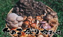 天然きのこ 盛り合せ500g秋の味覚 山の幸 山の恵み(食材)を盛り合わせ★養殖舞茸 しめじ えのき しか知らない貴方は人生損してます★ 日本で昔から愛される旬の天然キノコ(きのこ) 産地直送 きのこ鍋 すき焼き 天麩羅 炊き込み御飯 で 秋の味覚 満喫 ギフト