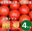 【送料無料】 完熟いとしろトマト麗夏 岐阜県郡上市石徹白産(王様トマト)4kg
