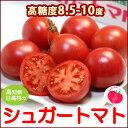 シュガートマト(約700g)高知産 フルーツトマト とまと 日高村 JAコスモス 糖度8.5度以上 送料無料