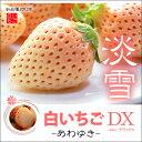 白いちご 淡雪(約200g×2)熊本産 白苺 白イチゴ 送料無料