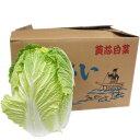 【箱売り】 白菜(はくさい・ハクサイ) 1箱(6本入り) 長野・大分・熊本・国産 【業務用・大量販売】【RCP】