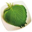 [冷蔵]『食材』エゴマの葉|えごまの葉(1束・10枚入)■日本産野菜 生野菜 韓国食材 韓国食品 オススメマラソン ポイントアップ祭