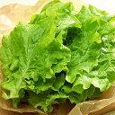 『食材』サンチュ(約100枚)■日本産 野菜 サムギョプサル 韓国料理\お肉を包んで食べる野菜、サンチュ/スーパーセール ポイントアップ祭